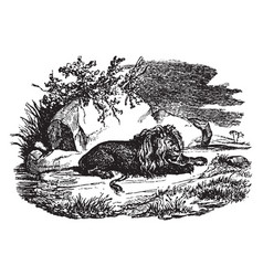 Recumbent lion vintage vector