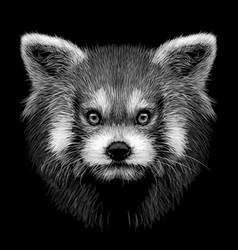 red panda graphic monochrome hand-drawn vector image