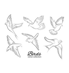 set hand drawn birds isolated on white vector image