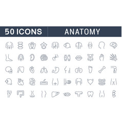set line icons anatomy vector image