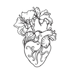Stylized anatomical human heart drawing heart vector