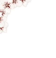 Border Made in Sakura Flowers Blossom vector