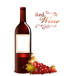 bottle of red wine vector image