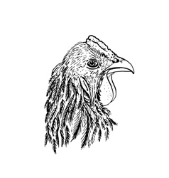 Ink drawing head of chiken vector