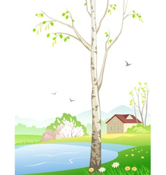 Spring birch vector image