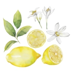 Watercolor lemon collection vector