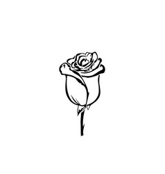 hand drawn rose flowers rose black and white vector image