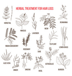 Medicinal herbs for hair loss treatment vector