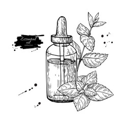 Mint essential oil bottle and peppermint leaves vector