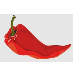 Painted red pepper pod lies vector