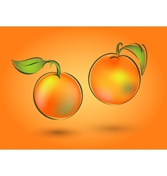 Two mandarin on an orange background vector image vector image