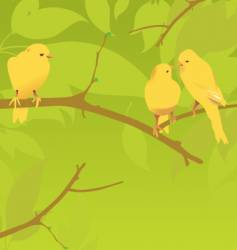 yellow canaries vector image vector image