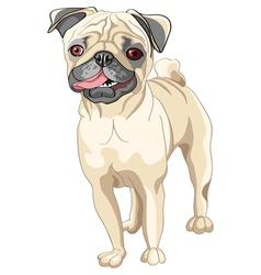pug breed vector image