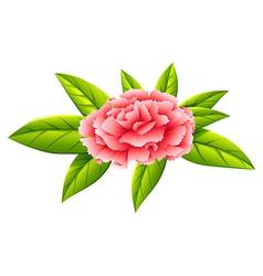 A carnation pink flower vector