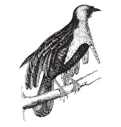 bird of paradise vintage vector image