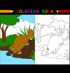 cartoon platypus coloring bookanimals series vector image