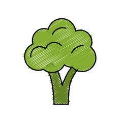 Delicious and health broccoli vegetable vector