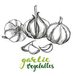 garlicvegetable set hand drawn vector image