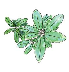 Plant exotic complex vector