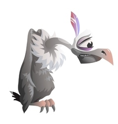 Cartoon vulture on a white background vector image
