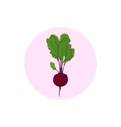 Icon beet root vegetable vector