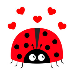 Lady bug ladybird icon love greeting card with vector