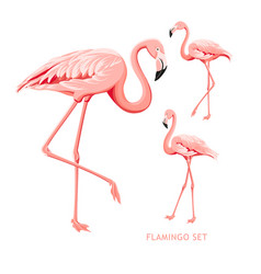 tropical birds collection pink flamingos set vector image