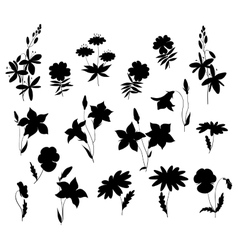 Silhouettes of wild flowers vector image vector image