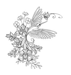 Contour hummingbird with orchids vector