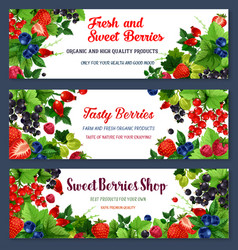 fresh sweet berries on banners vector image