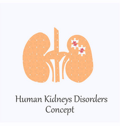 human kidneys filled with puzzle pattern vector image