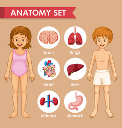 Scientific medical kids organs vector