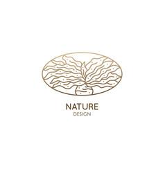 Boophone haemanthoides flower linear logo vector