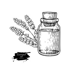 Lavander essential oil bottle and bunch of flowers vector