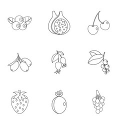 Plant berries icon set outline style vector