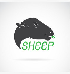 sheep head design on white background wild vector image