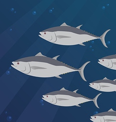 Group of tuna fish swimming vector image