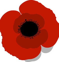 red Poppy vector image vector image