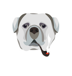 bullmastiff breed dog with smoking pipe close-up vector image vector image