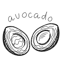 Avocado isolated on a white background vector