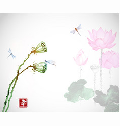 lotus flowers and dragonflies on white background vector image vector image