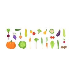 bundle ripe fresh organic fruits and vegetables vector image