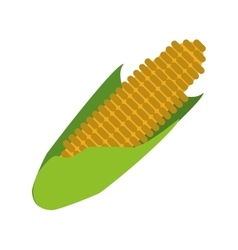Corn cob ripe leaves icon vector