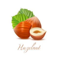 hazelnut nuts and leaves in realistic style vector image