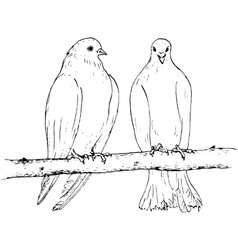 two doves at tree branch vector image