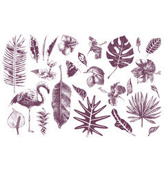hand drawn tropical leaves flowers and flamingo vector image vector image