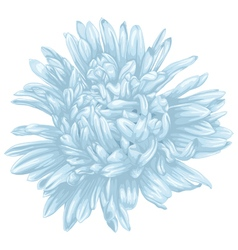 Beautiful blue aster isolated on white background vector image