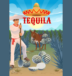 tequila production agave growing and harvesting vector image