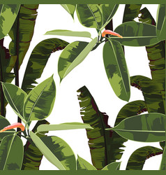 tropical bright ficus elastic and bananas leaves vector image