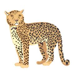 cheetah standing vector image vector image